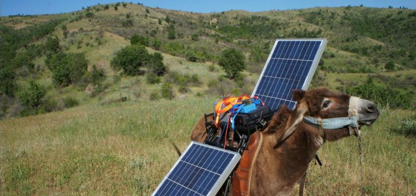 Burro Fotovoltaica